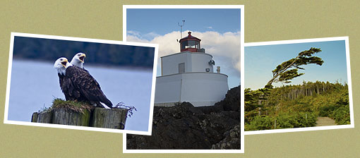 West Coast Wildlife, Amphitrite Lighthouse, Wild Pacific Trail. Do it all from Wild Pacific Bed and Breakfast